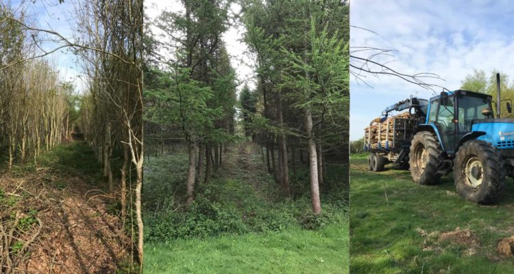 tree planting scheme