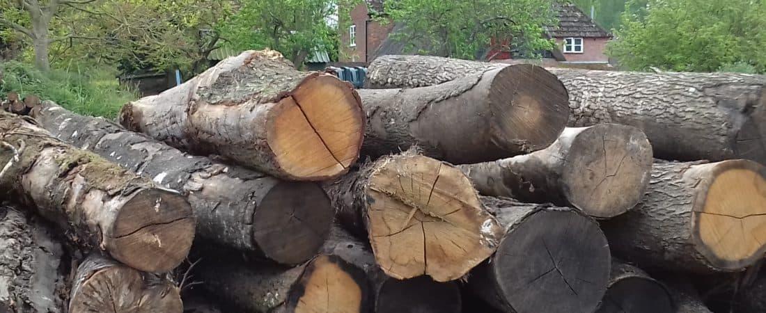 woodshed logs